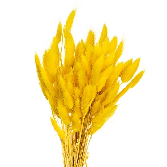 Лагурус, желтый (8430-023)