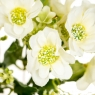 "Цветочный букет ""Белый"" (8023-001/white)"