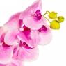 "Цветок ""Орхидея"" розовая 1 м (силикон) (8100-020)"