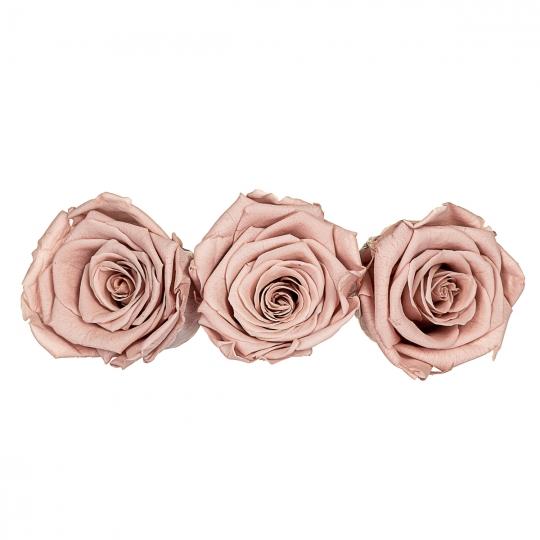 Стабилизированная роза, персиковая (8430-016)