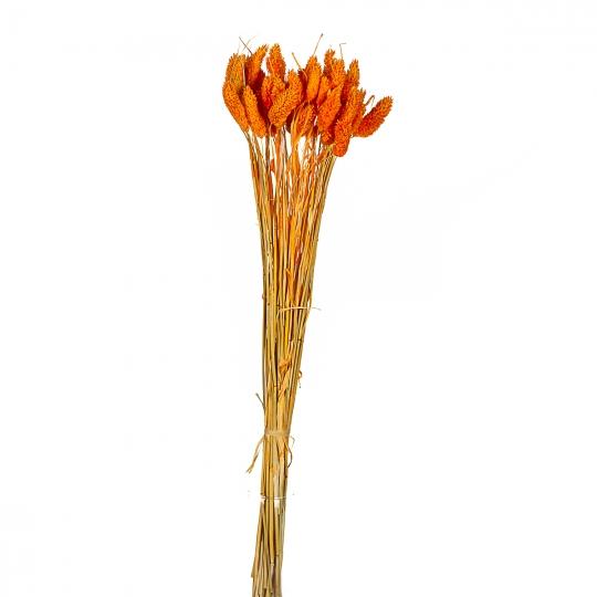 Стабилизорованный фалярис, красно-оранжевый (8430-041)