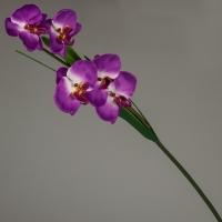 Орхидея (97 см)