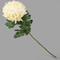 Хризантема (90 см)