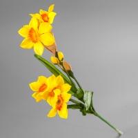 Нарцисс (75 см)