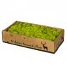 Стабилизорованный мох  светло-зеленый (8414-033)