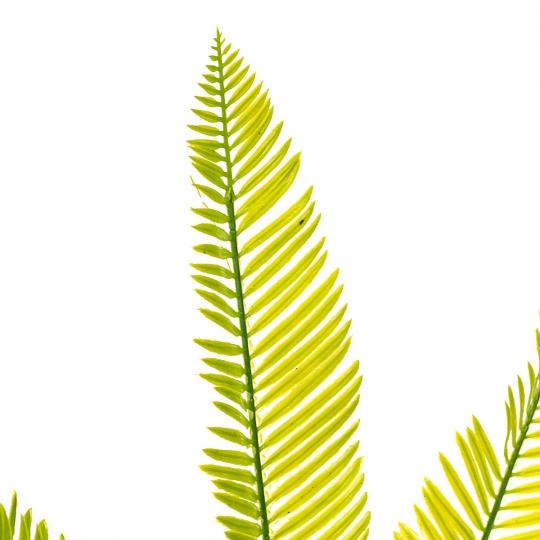 Куст папоротника желто-зелёный длиннолистный искусственный (8408-062)