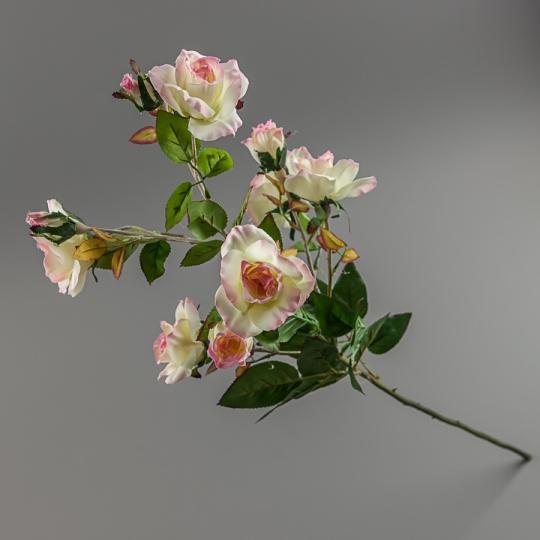 Камелия (75 см) (025F/white-pink)