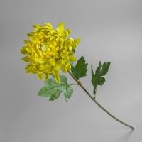 Хризантема (68 см)