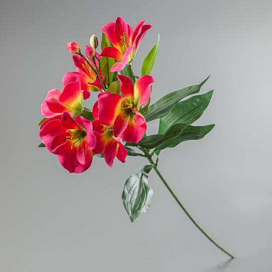 Альстромерия (65 см) (097F/pink)
