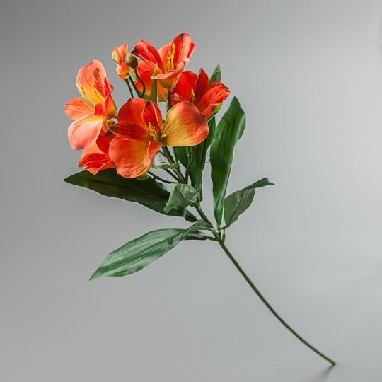 Альстромерия (65 см) (097F/orange)