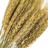 Колосья Пшеницы, стабилизированные (8213-001)