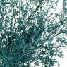 Деокративная ветка Голубая, стабилизированная (8213-015)