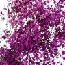 Гипсофила Фиолет, стабилизированная (8213-017)