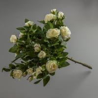 Розы (50 см)