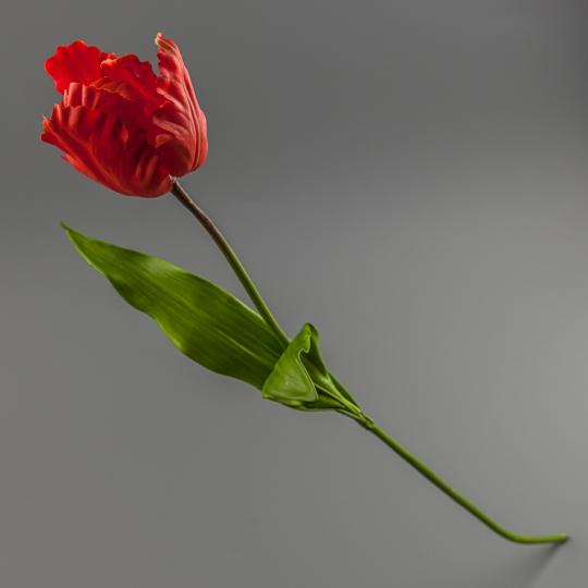 Тюльпан (силикон, 77 см) (117F/red)