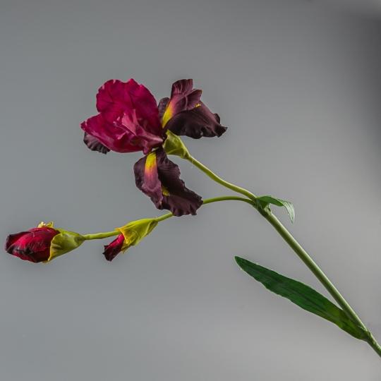 Ирис (104 см) (135F/red)