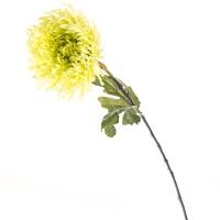 Хризантема (85 см)