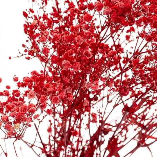 Гипсофила Красная, стабилизированная (8213-022)