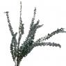 Эвкалипт, стабилизированный (8213-023)
