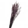 Лаванда Фиолет, стабилизированная (8213-035)