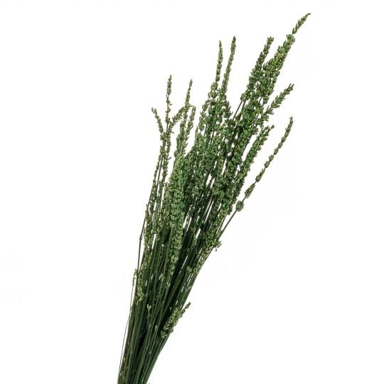 Лаванда Зеленая, стабилизированный (8213-036)