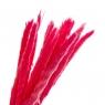 Пампасная трава Розовая, стабилизированная (8213-040)