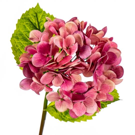 """Цветок искусственный """"Гортензия Papillon"""" фуксия (8100-039)"""