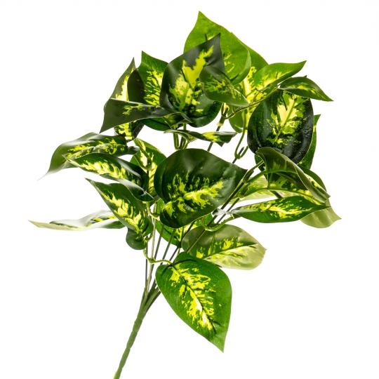 Цветок Диффенбахия (2001-003)