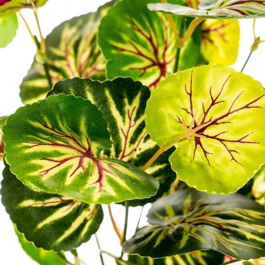 Цветок Филодендрон (2001-007)