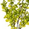 Цветок Эвкалипт салатовый (2001-014)