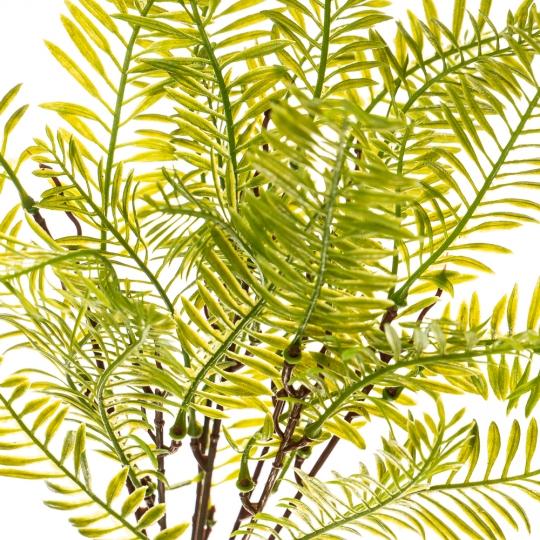 Цветок Финиковая пальма (2001-017)