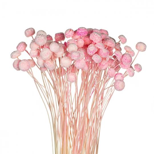 """Сухоцветы """"Ботао"""" нежно-розовые (8430-004)"""