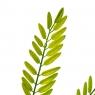 Ветвь папоротника зелёно-желтая искусственная (8408-054)