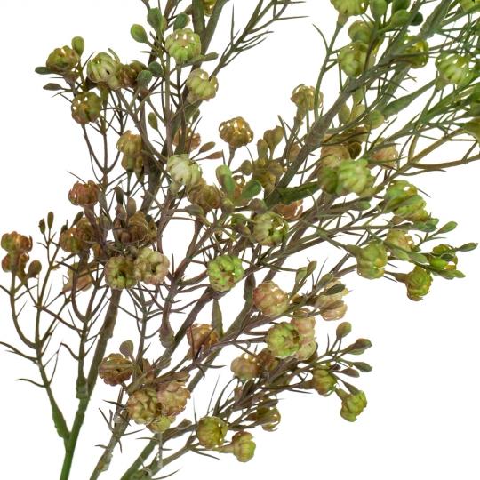 Ветка сухоцвета полевого зеленая (8100-002)