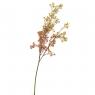 Ветка сухоцвета полевого оранжевая (8100-005)