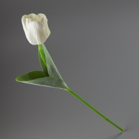 Тюльпан (56 см)
