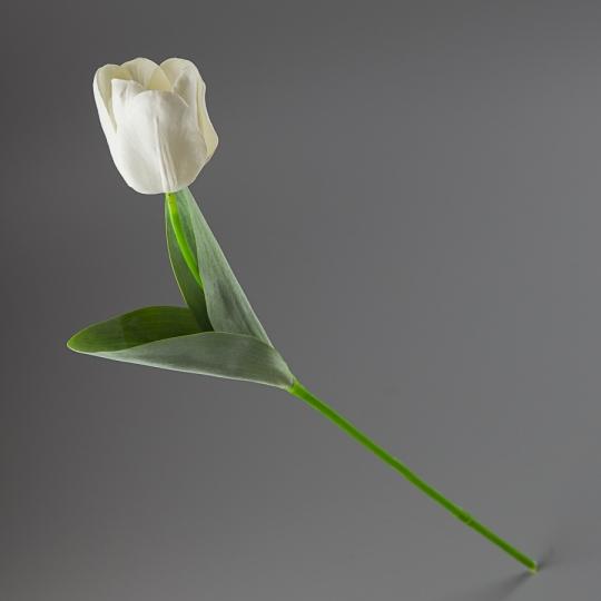 Тюльпан (56 см) (005FR-1/white)
