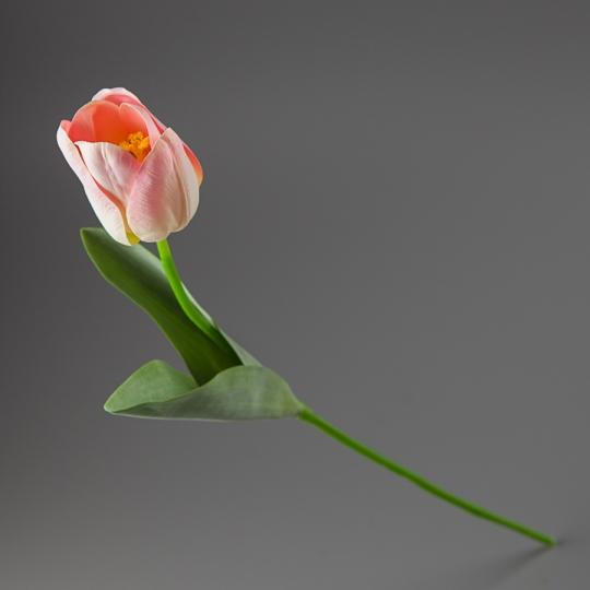 Тюльпан (56 см) (005FR-2/pink)
