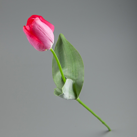Тюльпан (56 см) (005FR-7/pink)