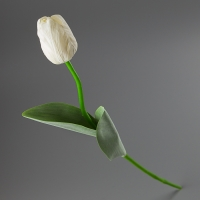 Тюльпан (67 см)