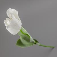 Тюльпан (66 см)