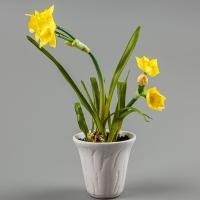 Нарциссы (30 см)