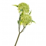 Вибурнум цветок желтый (8024-002)
