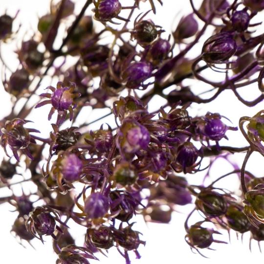 Ваксфлауэр букет фиолетовый (8024-010)