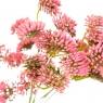 Статис букет розовый (8024-012)