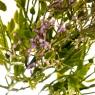 Букет Гипсофилы фиолетовый (8031-009)