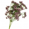 Букет ваксфлауэра фиолетовый (8031-017)