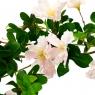 Цветущая розовая ветвь (8100-062)