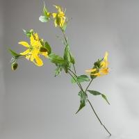 Глориоза (125 см)