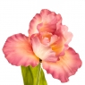 """Цветок искусственный """"Ирис алый закат"""" (2000-013PK)"""